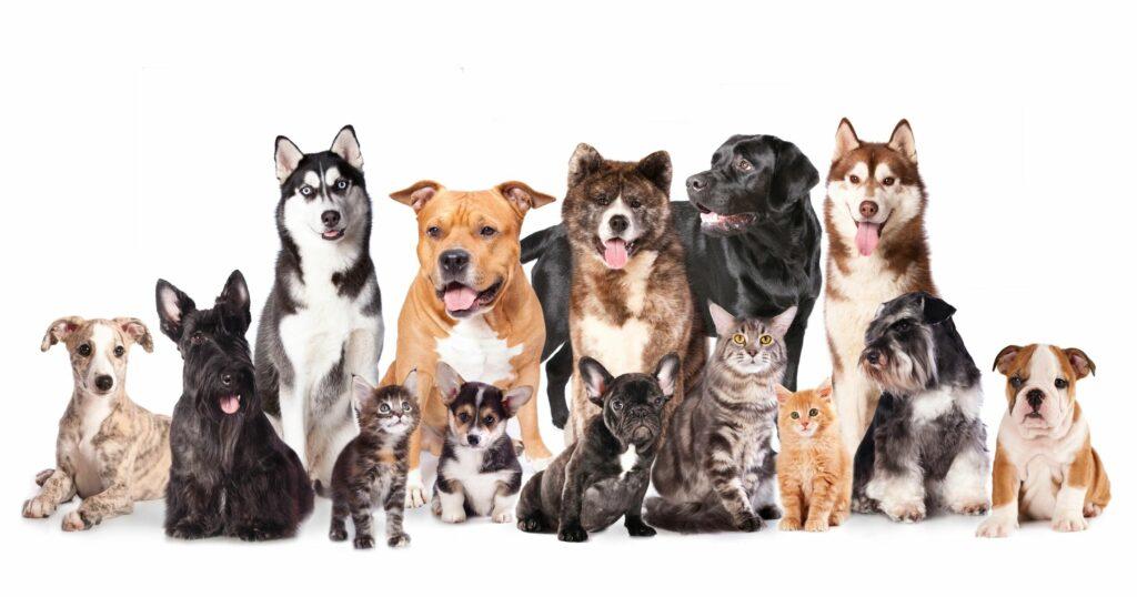 Recife oferece agendamento de serviço de cadastramento animal para Abril 2019.